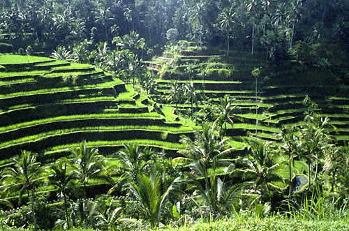 John Whisson: Sculpted rice field terraces