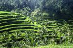 Sculpted rice field terraces